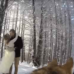 un chien filme le mariage de ses maîtres