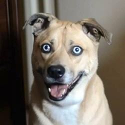 chien hynotiseur video