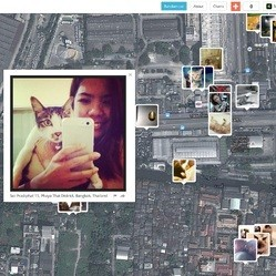 carte photos de chats