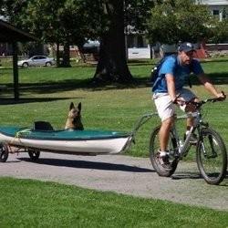 chien handicapé