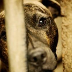 diaporama idees recues chien refuge