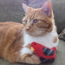 jouets pour chat