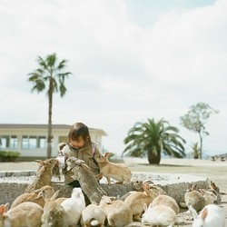 île lapins Okunoshim japon