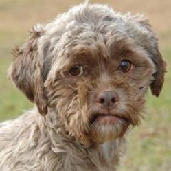 un chien abandonné au visage humain émeut le web
