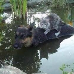 chien chat inondation serbie