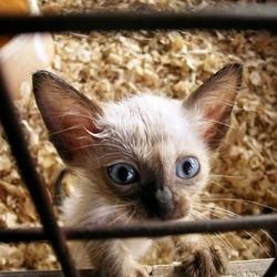 interdiction vente d'animaux en animalerie australie