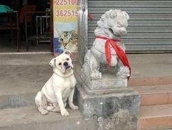 interdiction de manger de la viande de chien et chat
