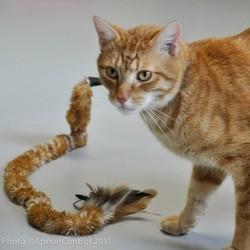 ipet, jouer à distance avec des chats