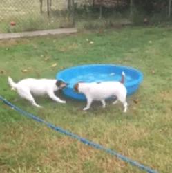 Jack et piscine