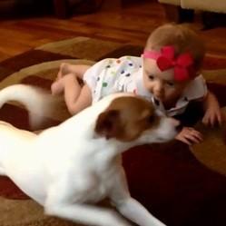Un chien apprend à un bébé comment ramper
