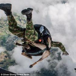 chien renifleur parachutise