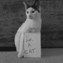 un chat dans tous ses états