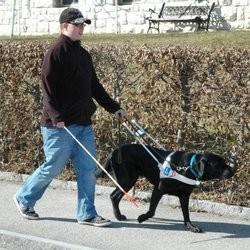 mineur suisse chien guide d'aveugle