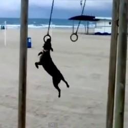 londres jeux olympiques 2012 chien