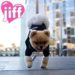 Jiff, le chien qui marche sur deux pattes