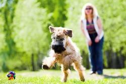 pratiquer ring chien