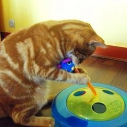 on a test pour vous le jouet pour chat chasse souris conso. Black Bedroom Furniture Sets. Home Design Ideas