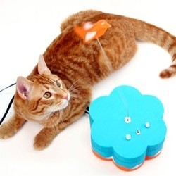 jouet pour chat kitty twitty