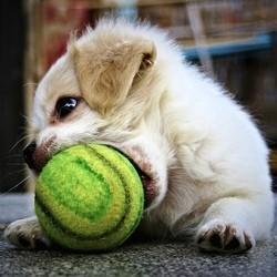 jouet pour chien et chat dangereux