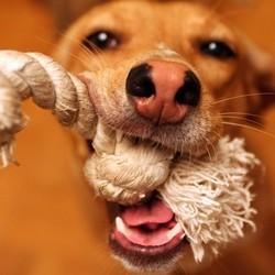 jouet pour chien educatif