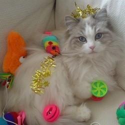 jouets pôur chat