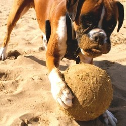 chien jouets vacances plage