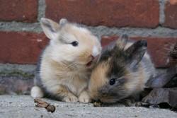 journée officielle du lapin