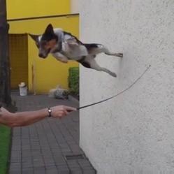jumpy chien cascades