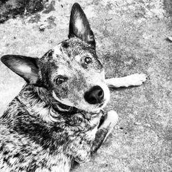 justice chien cisco tué policier