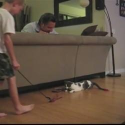 chat saut périlleux karaté cat
