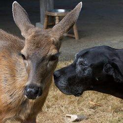un chien et un daim se lient d'amitié