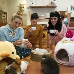 katy perry cat cafe tokyo