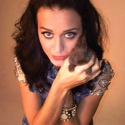 katy perry lapin