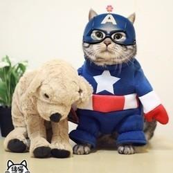 ke le chat star du web