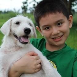 un petit garçon sauve des chiens errants