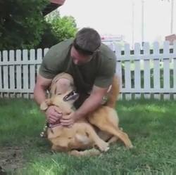 les retrouvailles d'un chien errant et d'un soldat américain