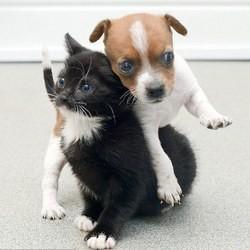 un chiot et un chat abandonnés deviennent inséparables