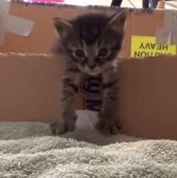 Chaton dans un carton