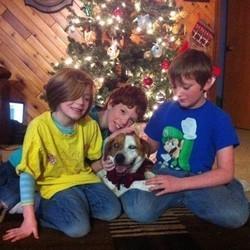 un chien perdu dans une tempête de neige retrouve sa famille