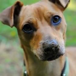 la vie d'un chien adopté