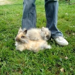 la vie de lapins nains de compagnie