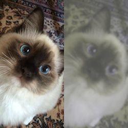 Un chat vu par un chien