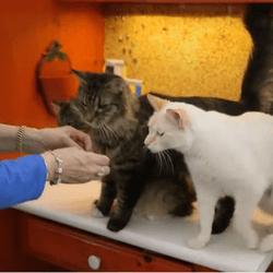 chats langage des signes