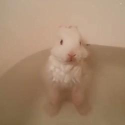 un lapin prend son bain