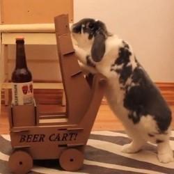 un lapin apporte une bière à son maître