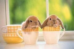 lapin cafe tasse