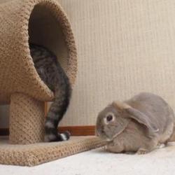 Lapin qui joue avec une queue de chat
