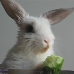 un bébé lapin mange un concombre