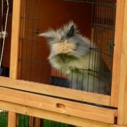les rongeurs ont-ils vraiment besoin d'une cage