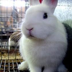 Les produits cosmétiques testés sur des animaux interdits en Europe